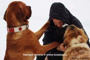 tosa a jiní psi